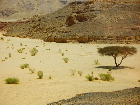 erosion: Lonely tree and some bushes in the desert