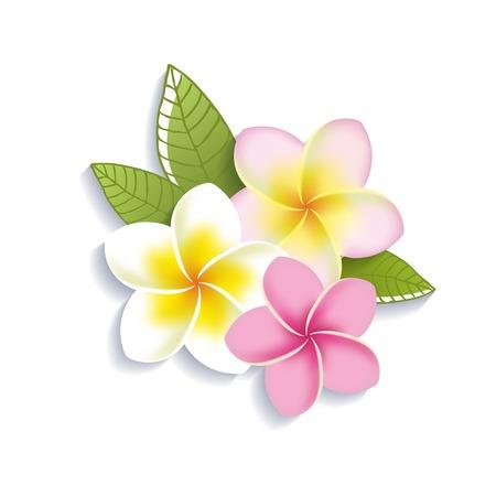 白い背景上に分離されてベクトル プルメリアの花