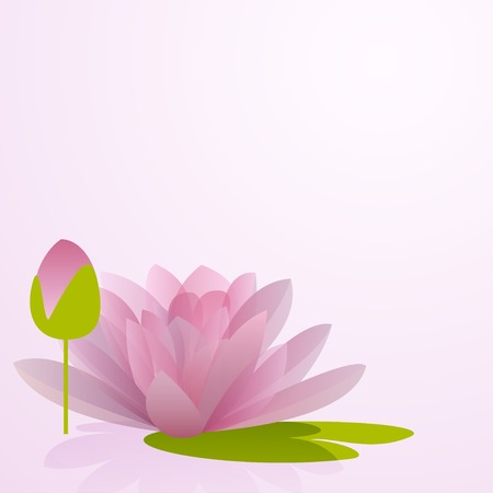 Pink waterlily flower with reflection in water