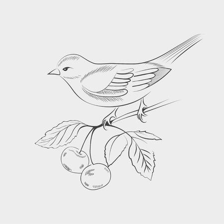 oiseau dessin: Tiré par la main oiseau sur une branche. Vector illustration Illustration