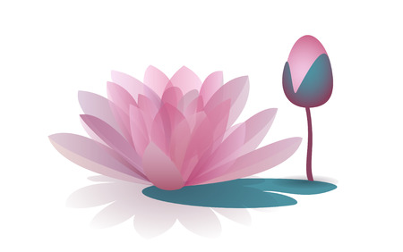waterlily: Pink waterlily flower isolated on white background. Vector illustration