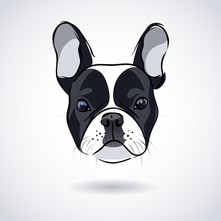 french: French bulldog head isolated on white background. illustration