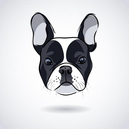frenchie: French bulldog head isolated on white background. illustration