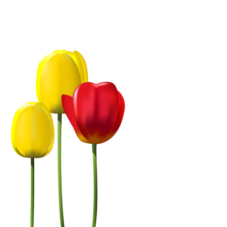tulips isolated on white background: Red and yellow tulips isolated on white background. realistic illustration Illustration