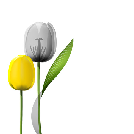 Gele tulpen op een witte achtergrond. realistische illustratie