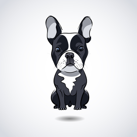 French bulldog isolated on white background. illustration