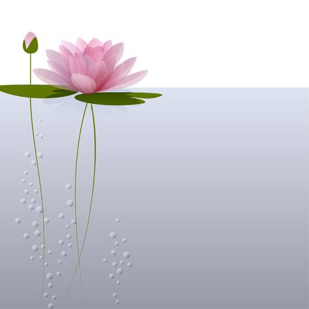 スイレンの水の上