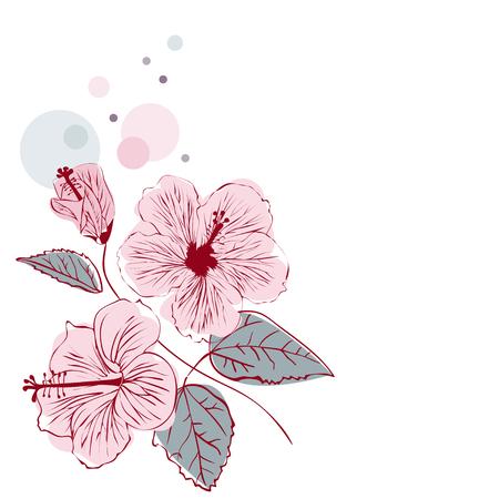 Hibiscus Flower on white background Ilustração