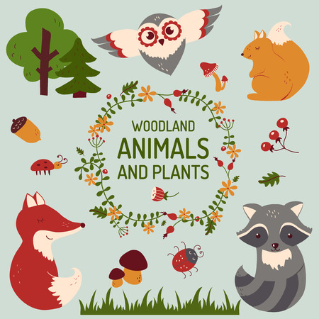 cartoon raccoon: Forest animals and plants set. Cute woodland elements isolated on clean background. Vector collection for baby and kids design. Hand drawn illustration. Illustration