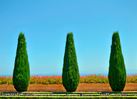 trees and flowers in the Bahai gardens overlooking the Mediterranean sea. Haifa, Israel