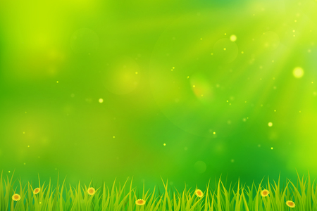 Green spring background. Blurred abstract design with grass, flowers and sunlight. Vector.