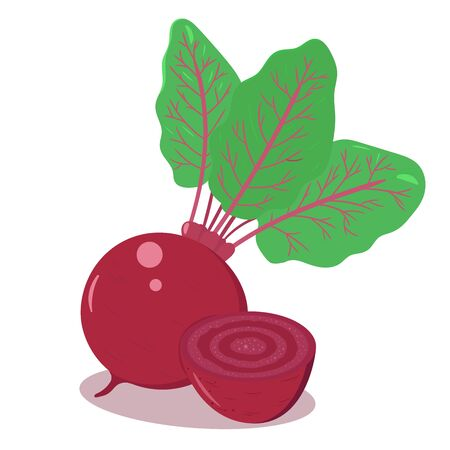 Vector illustration of a beetroot with green leaves. Isolated on white background. Fresh farm vegetables concept.