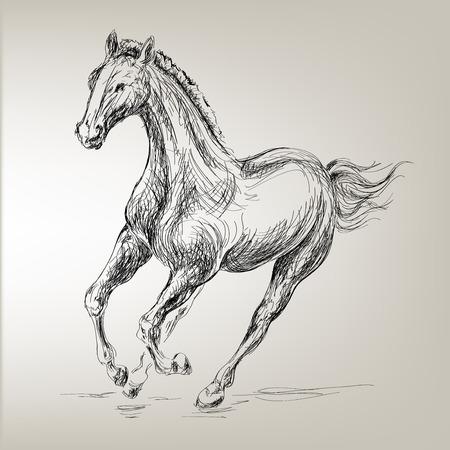 equestrian: free prancing horse for equestrian design