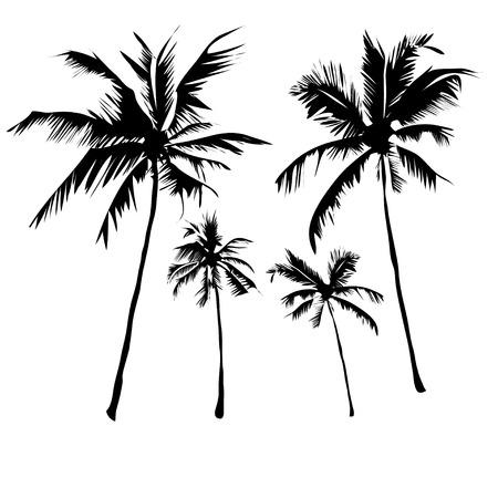 벡터 그림은 흰색 배경에 잎 열 대 야자수 나무, 성숙하고 젊은 식물, 흰색 배경에 고립 된 검은 실루엣을 설정합니다. 일러스트