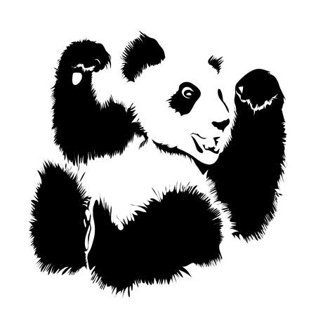 oso panda: Imagen de un oso panda aislado del vector sobre un fondo blanco Vectores
