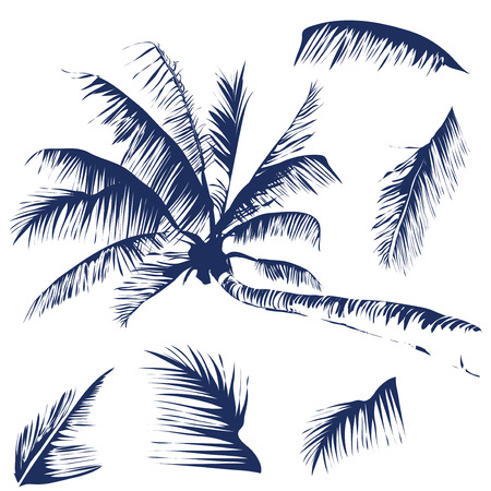 branch silhouette: Vector isolated image of a coconut tree with some leaves