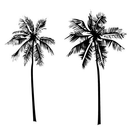 arboles frutales: Vector Set palmeras tropicales, siluetas negras sobre fondo blanco.