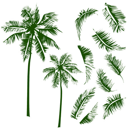 tree silhouettes: Vector isolated image of a coconut tree with some leaves