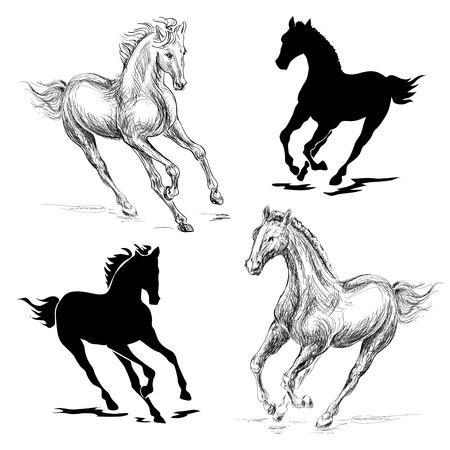 gente saltando: ilustración de un caballo al galope sobre un fondo blanco Foto de archivo