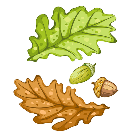 sienna: Set of isolated oak leaf and acorn. Vector illustration