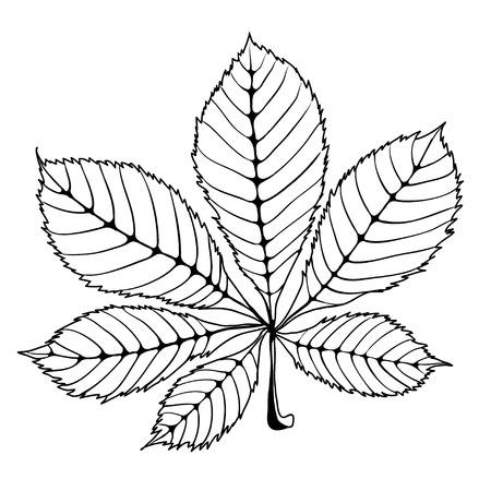venation: Isolated skeleton oak leaf with veins Illustration