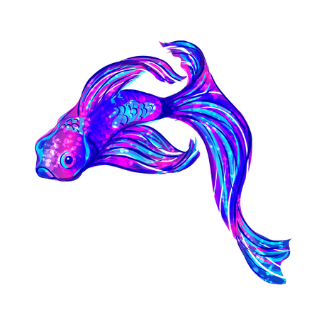 ultramarine: isolated ultramarine aquarium fish on white background. Vector illustration. Illustration
