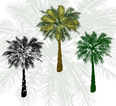 limbs: Vector  isolated illustrations Set tropical palm trees Illustration