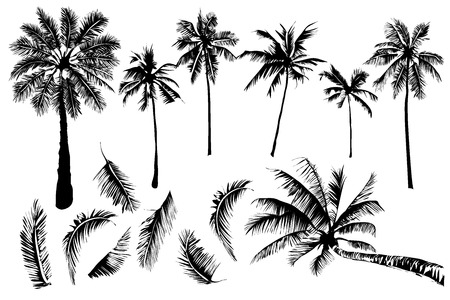 Vector illustrations Set tropical palm trees with leaves on a white background, mature and young plants, black silhouettes isolated on white background.