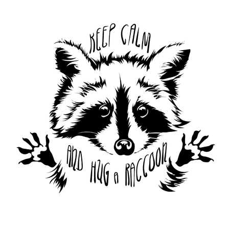 affable: Funny and touching raccoon wants to hug and cuddle.  keep calm and hug a raccoon