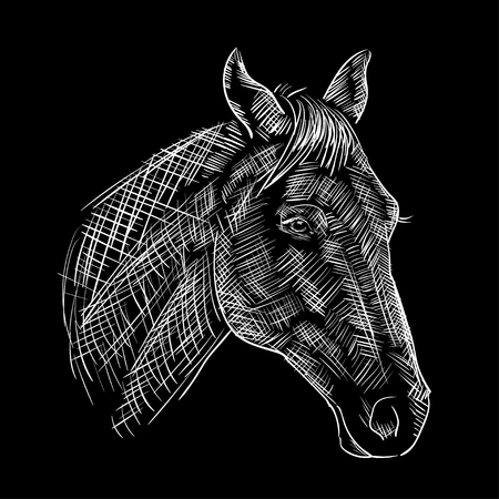 engraving print: white engraving, print, sketch of a horses head on a black background