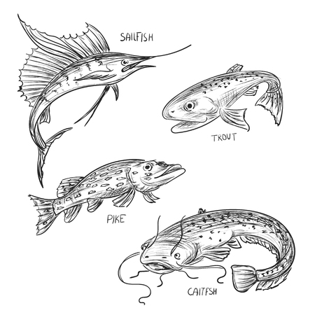 pez vela: Conjunto de vector de la pesca Mano boceto dibujado con el bagre, trucha, lucio, pez vela