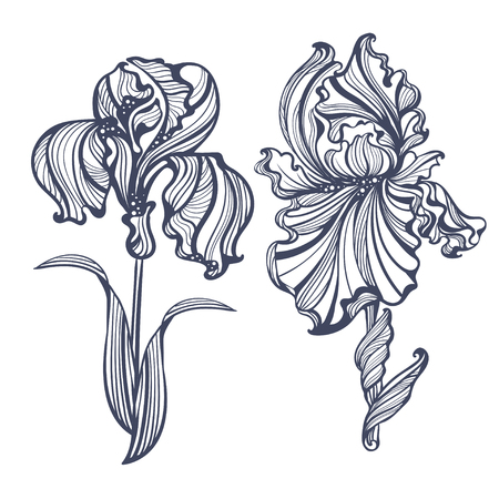 violet flowers: graceful isolated iris in vintage style Art Nouveau. It can be used as embossing, tattoo, postcards or engraving