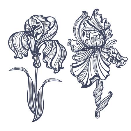 stile liberty: iris grazioso isolato in stile vintage Art Nouveau. Può essere utilizzato come goffratura, tatuaggio, cartoline o incisione Vettoriali