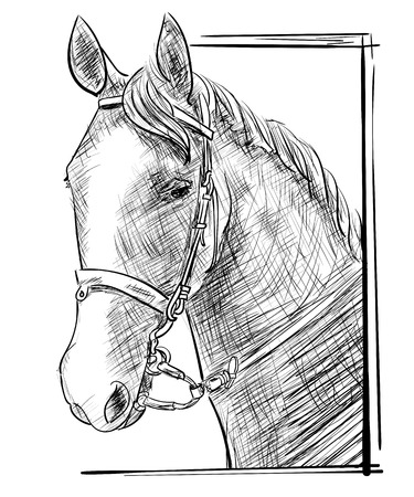 harness: Vector engraving sketch of hand drawn horse head in harness, looking out the window isolated on white background