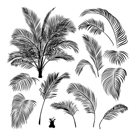 constructor - set of isolated palm leaves and assembled date palm