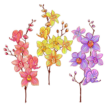 purple flowers: set of hand drawn isolated branches of orchids. Yellow, pink and purple colors vector realistic flowers Illustration