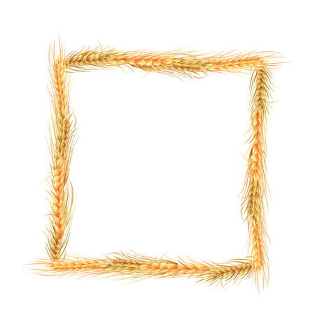 oats: isolated square frame of rye, barley and oats