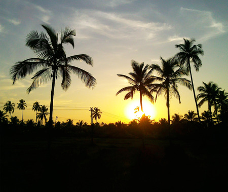 black palm trees on a sunset background
