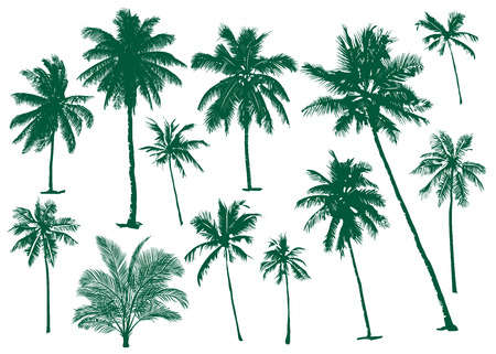 Vector illustrations Set realistic black silhouettes isolated tropical palm trees on a white background Illustration