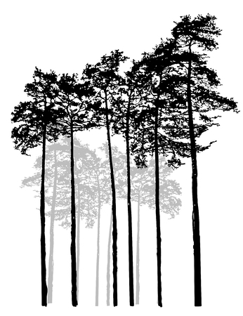 white: Realistic Relic black white pine forest. Monochrome isolated pine forest. Ship pines. Illustration