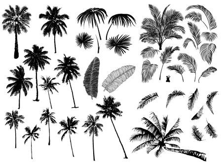 Set constructor from realistic black silhouettes isolated tropical palm trees, branch and separate banana leaves, talipot on a white background  イラスト・ベクター素材