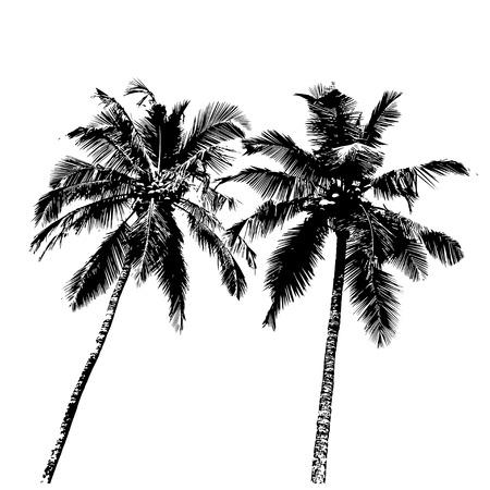Tropische Palmen