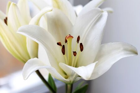 White lily flowers bouquet. Close-up, light blooming wedding background. Floral pattern, abstract background.