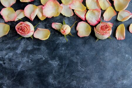 Pink petals and buds on a black background, roses and petals on rustic black chalk background. Copy space. Stock Photo