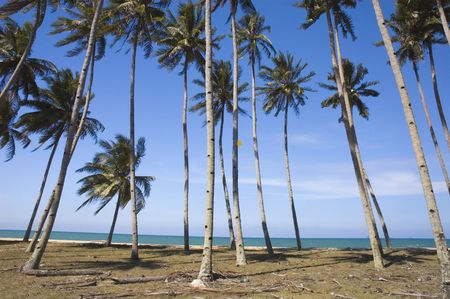 blue beach with coconut Stock Photo - 2817690