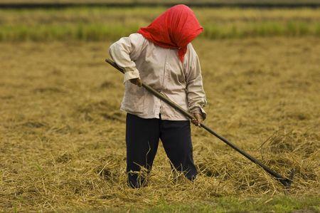 toil: farmer Stock Photo