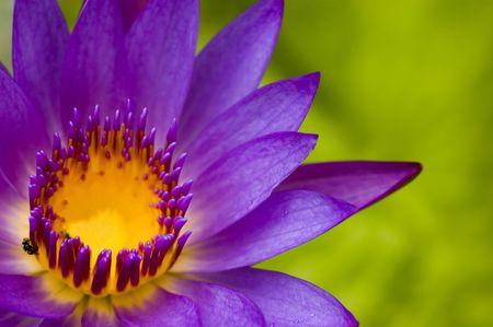lotus flower for concept purpose Stock Photo - 3097575