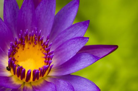 lotus flower for concept purpose Stock Photo - 3097575