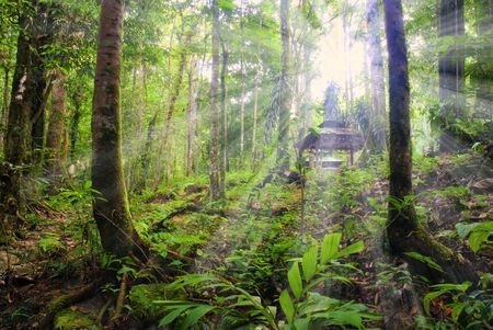 rainforest with ray of lights  photo