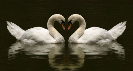 love shape swan photo